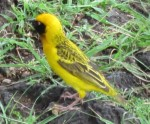 bird01_IMG_7058 (150 x 124)