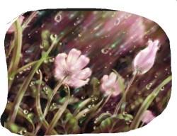 flower in rain-2b
